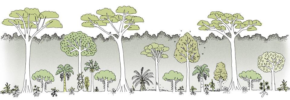 Agrofloresta Ilustrativa