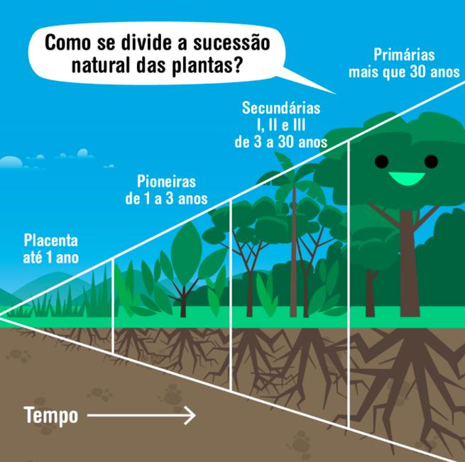 Produção Agrofloresta por hectare