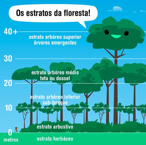 Produção Agrofloresta por hectare 80 Toneladas