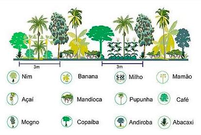 Produção Agrofloresta Tonelada por hectare