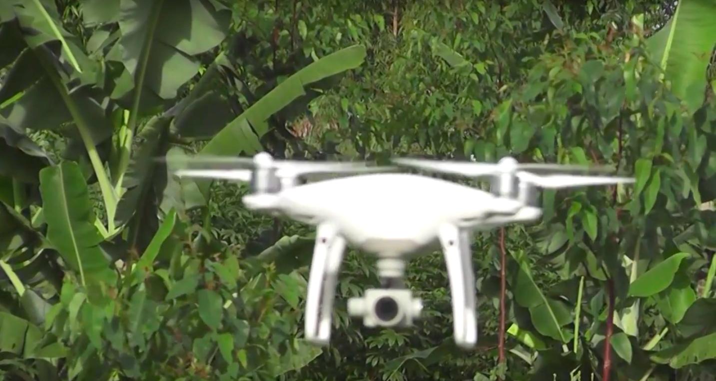 Agrofloresta Filmagem com Drone